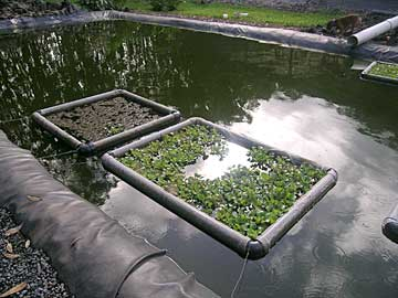 breeding pond